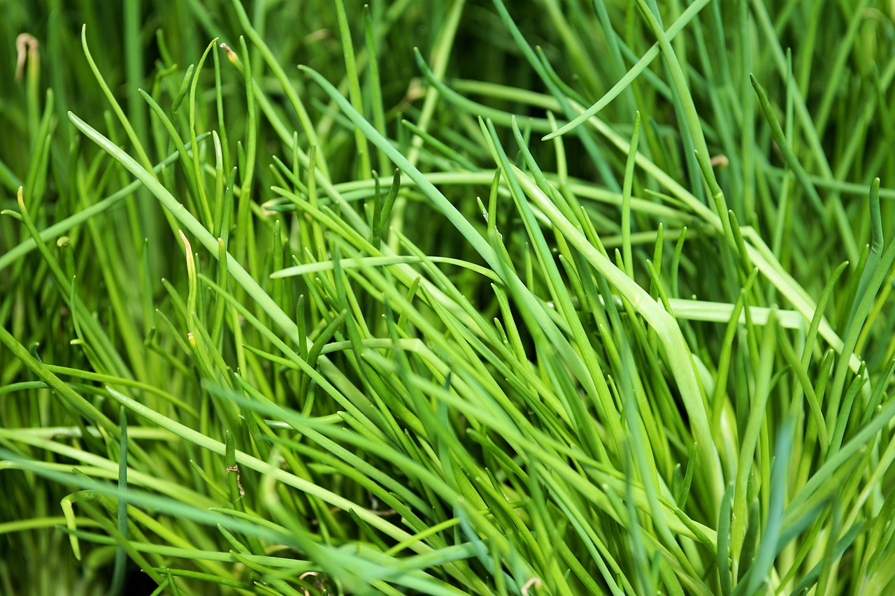 FIND OUT MORE ABOUT CHIVES