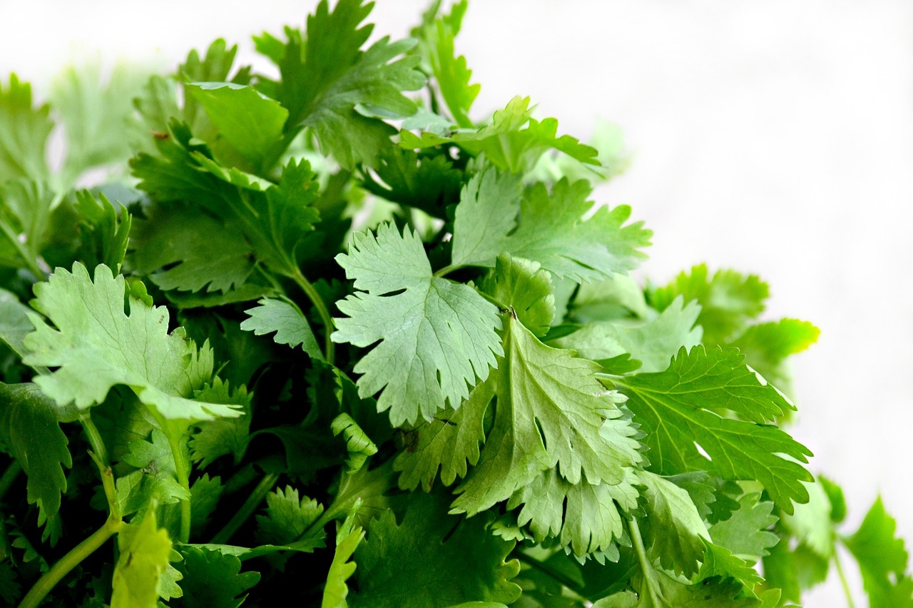 FIND OUT MORE ABOUT CORIANDER LEAVES