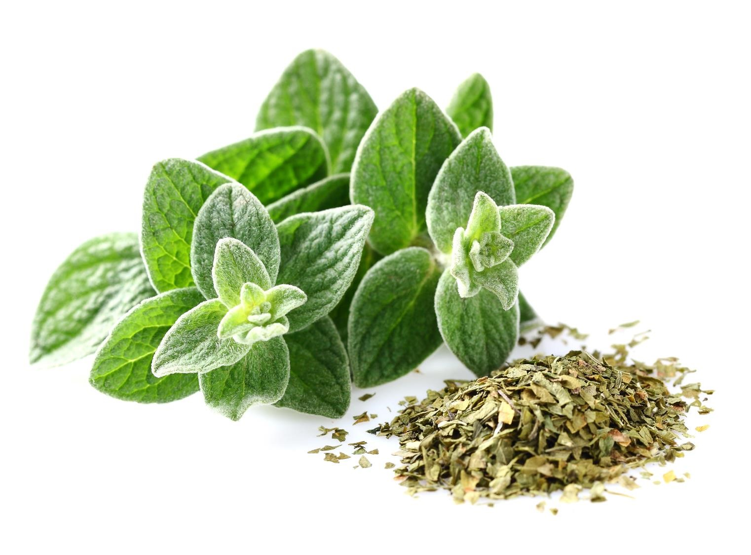 FIND OUT MORE ABOUT OREGANO