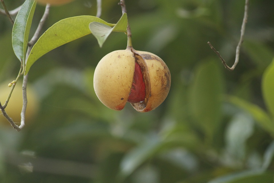 FIND OUT MORE ABOUT NUTMEG
