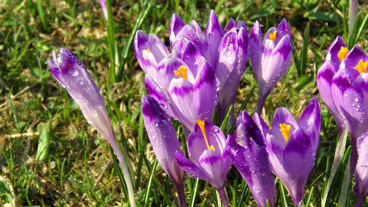 FIND OUT MORE ABOUT SAFFRON