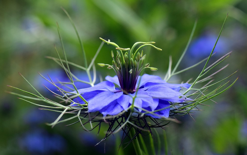 FIND OUT MORE ABOUT NIGELLA